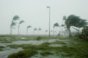 hurricane windes blowing through palm trees