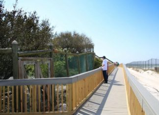 man looking standing on wooden walkway looking at dunes