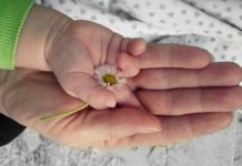 mother's hand holding baby's hand holding a flower