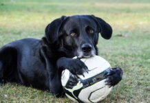 dog holding a soccer ball