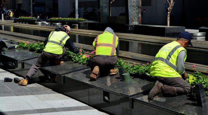 gardeners planing plants