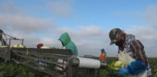 Farm workers on the job