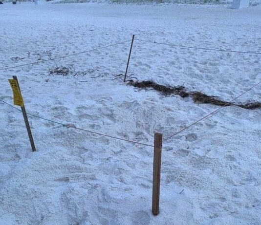 turtle nest outlined by string barrier